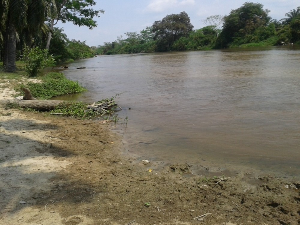 finca fundacion con palma sembrada al lado del rio