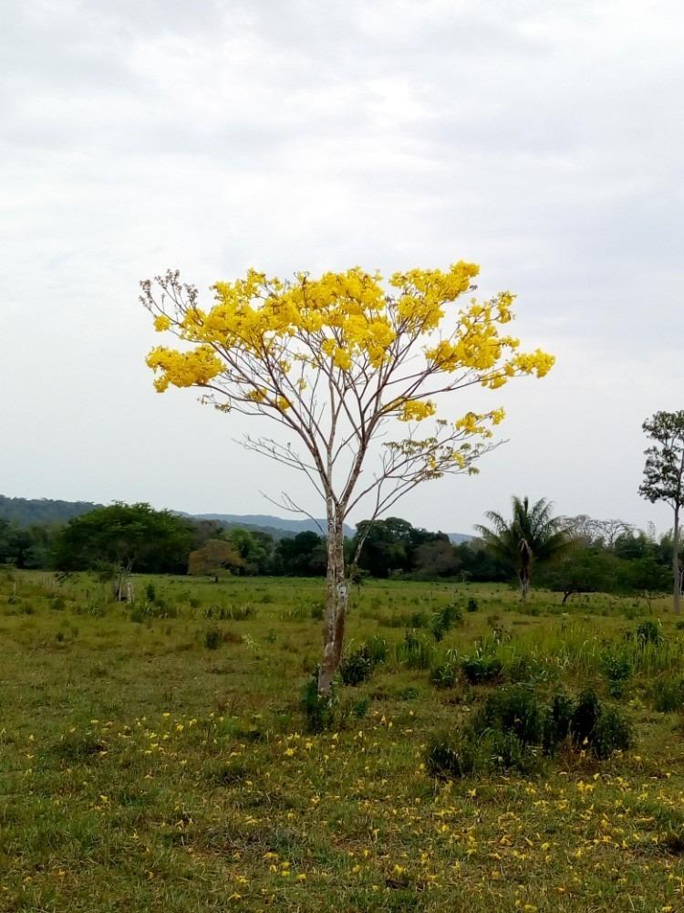 finca ganadera macarena