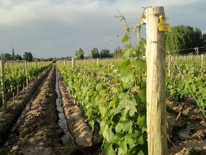 finca, mendoza, campo , uvas , liquido primera oferta!!!!!!!
