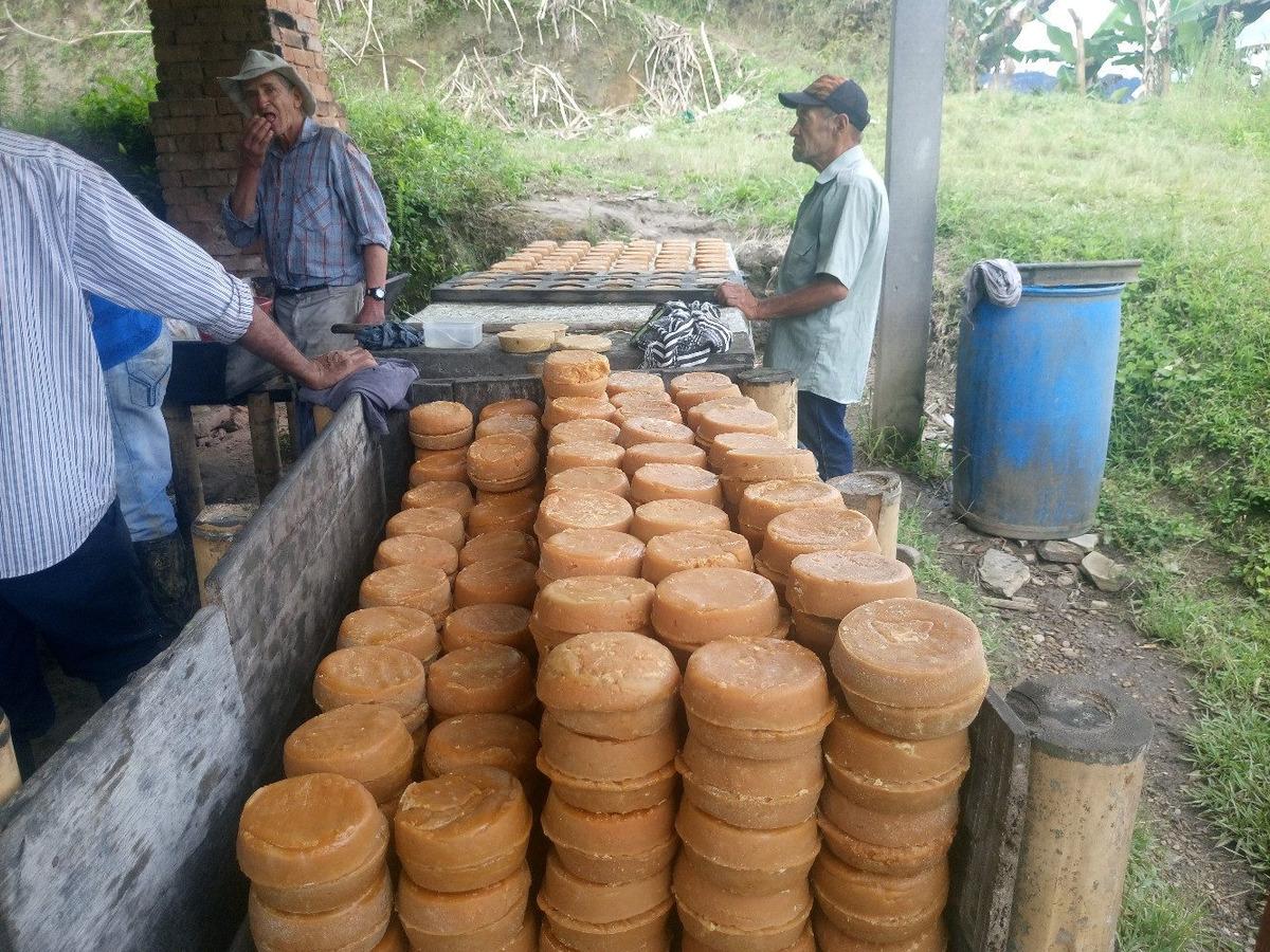 finca panelera, cafetera y productora de aguacate