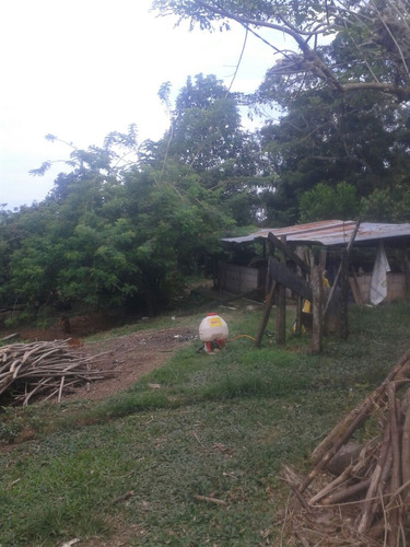 finca para ganadería, porcicultura y frutera en mariquita