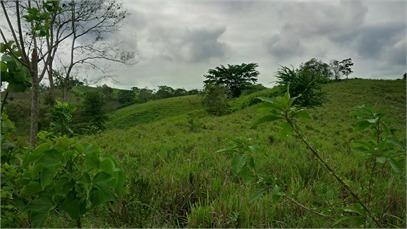 finca para producción forestal, ganadera o turistica