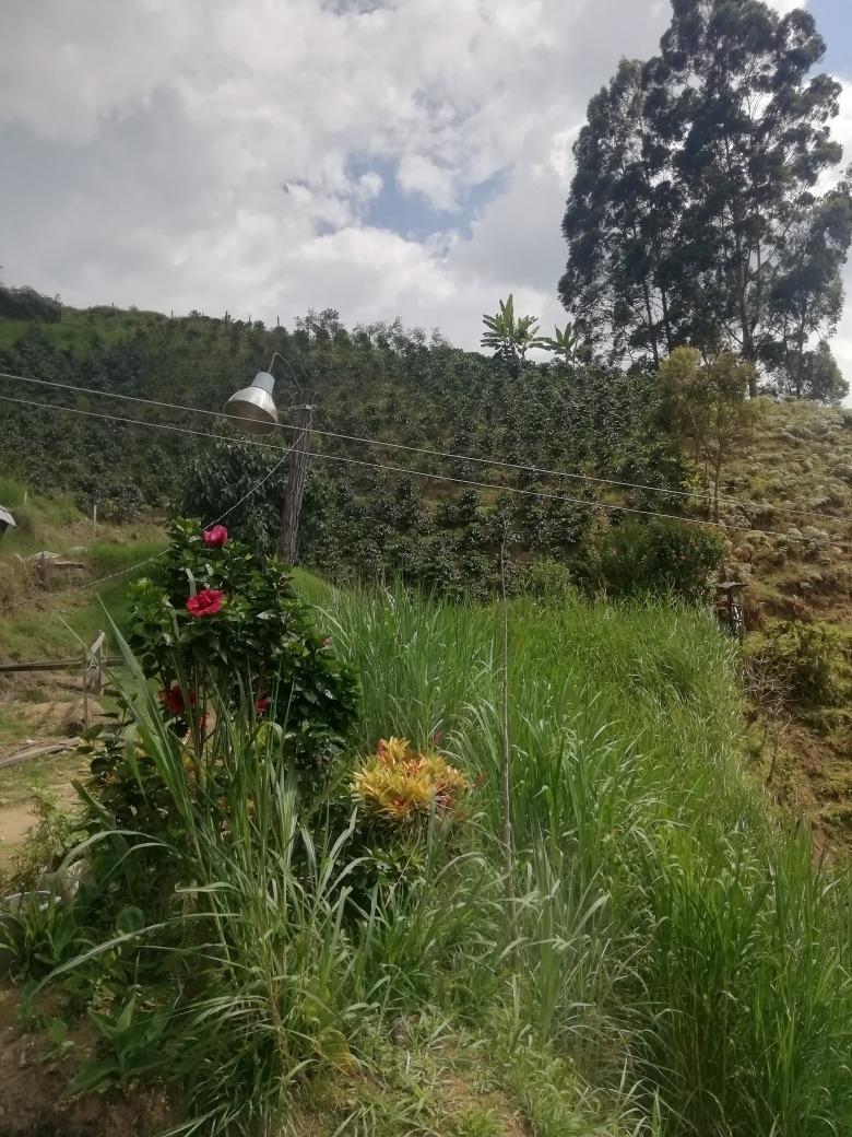 finca productiva en la vereda cominal en ginebra valle