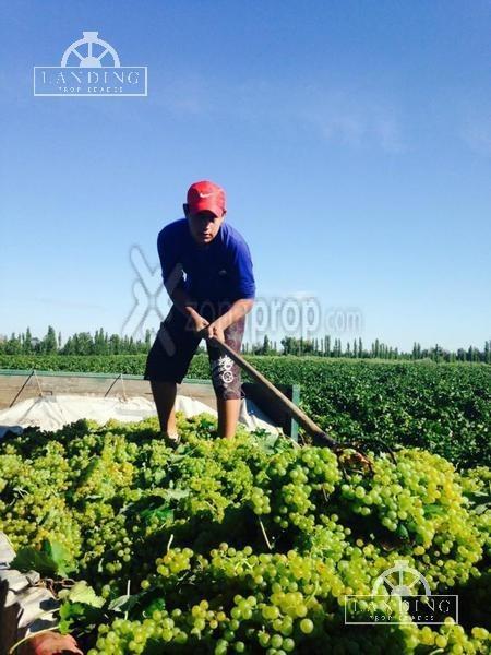 finca productiva en venta en mendoza, 60 has cultivos intensivos