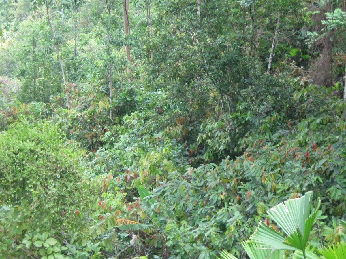 finca san vicente de chucuri,santander,colombia 16 hectareas