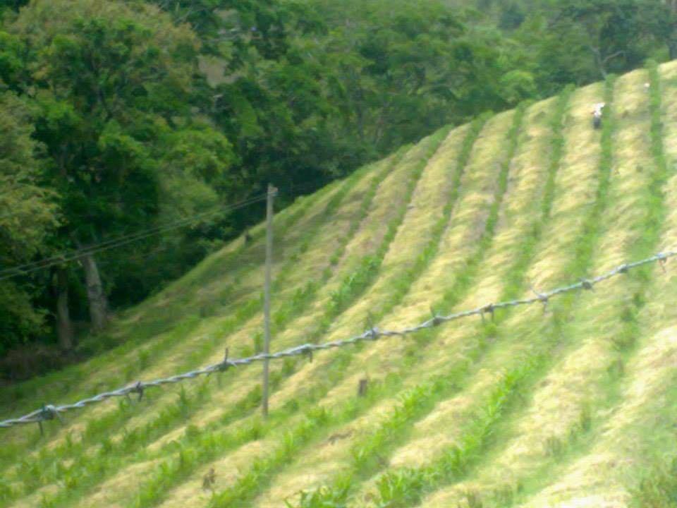 finca, valle del c. la unión.