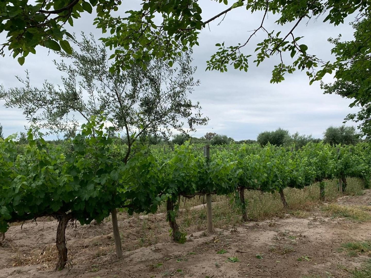 finca viñedos