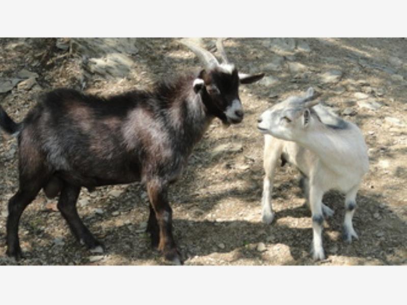 finca/rancho en venta en congregacion san pedro