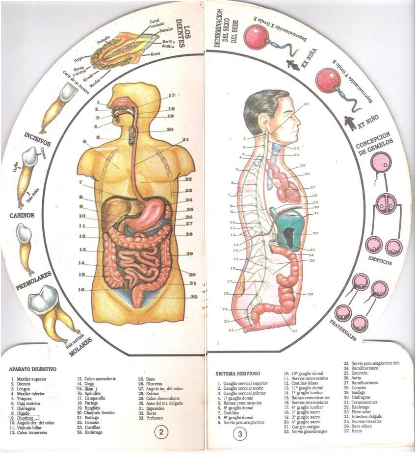 Atractivo Diagrama De Cuerpo Hígado Adorno - Anatomía de Las ...