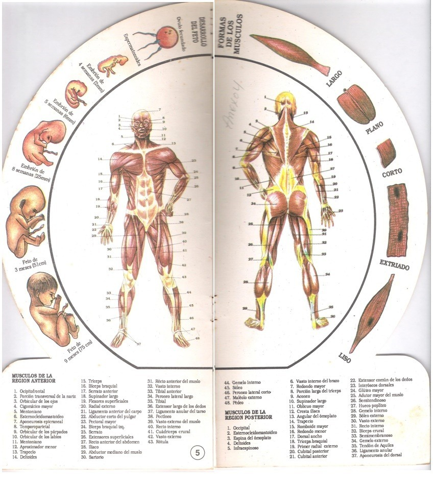Fisiología Humana Con Diagrama Del Cuerpo Humano - Bs. 1.400,00 en ...