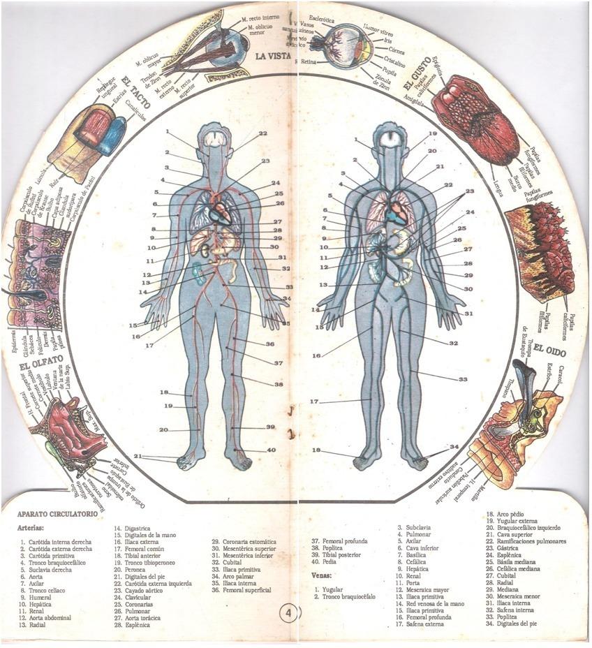 Fisiología Humana Con Diagrama Del Cuerpo Humano - Bs. 3.000.000,00 ...