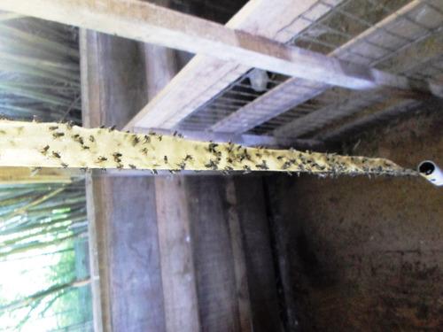 fita cola mosca, mosquito e outros insetos. cx c/25 unidades