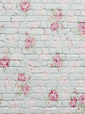 flor blanca pared fondo paño foto estudio sueño fotografía p