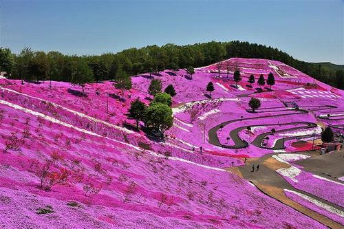 flor jardín semillas