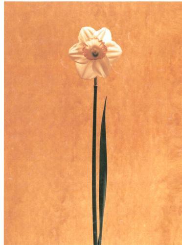 flor para hacer tu cuadro.n.11.