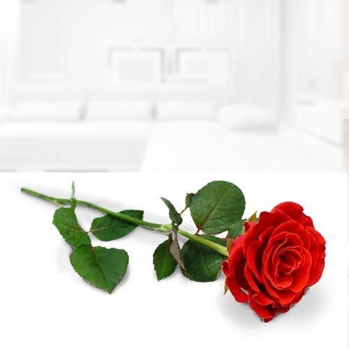 Floreria Rosa Individual Flores A Domicilio Rosas A