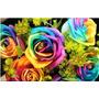 50 Semillas De Rosas Arco Iris