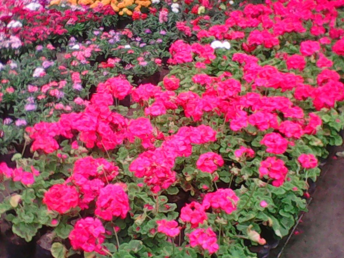 Flores De Estaci N Plantas Ornamentales Arboles