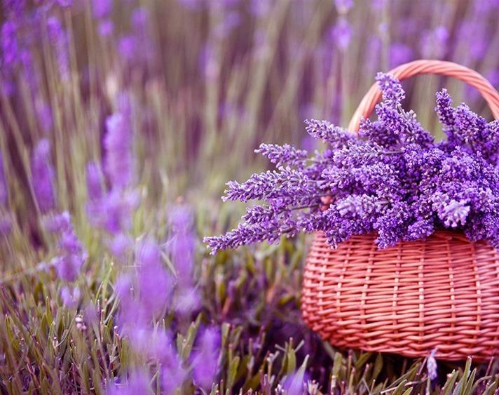Flores De Lavanda 500gr 950 00 En Mercado Libre