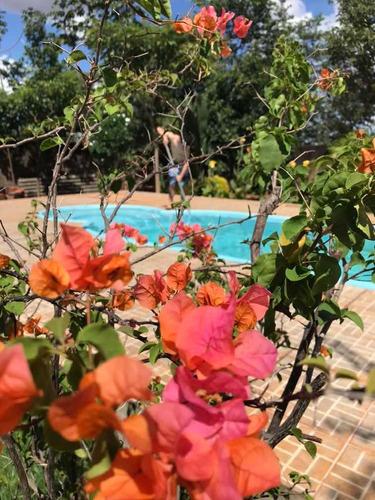 flores e frutíferas de 35 a 120 reais. pergunte