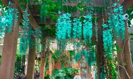 Resultado de imagem para jade flor