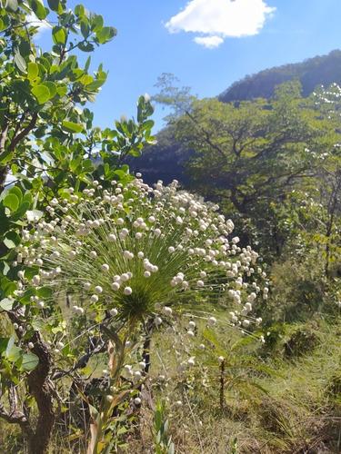flores naturais curso