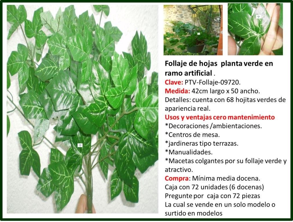 Flores y plantas follaje para el hogar omm en for Plantas decorativas para el hogar