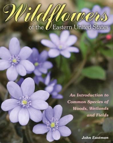 flores silvestres del este de los estados unidos: una