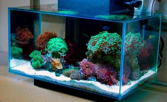Fluval edge led acuario marino 23lts 4 en for Acuario marino precio