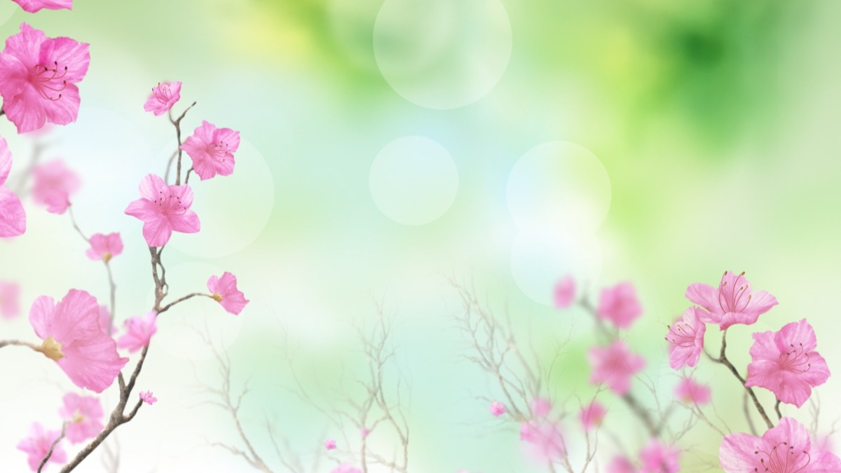 Fondos Para Fotos Hd: Fondos Video Background Full Hd Pack Primavera Y Verano