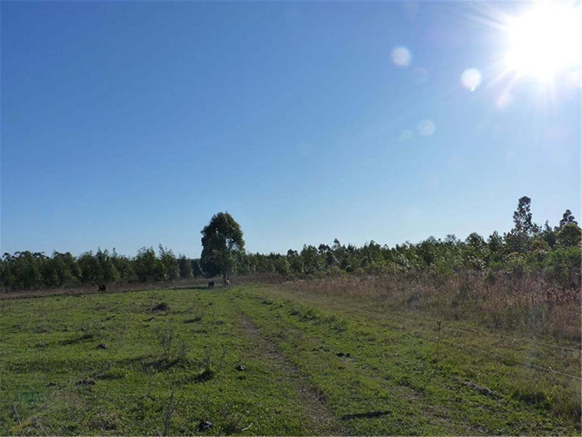 forestación 100 has.  concordia
