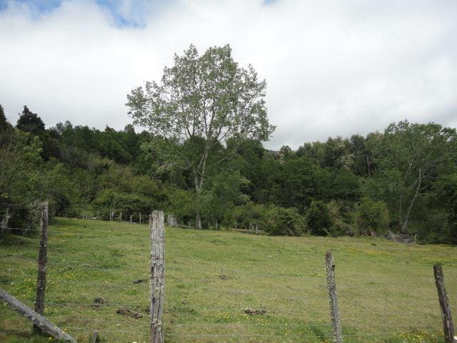 forestal en venta en los lagos