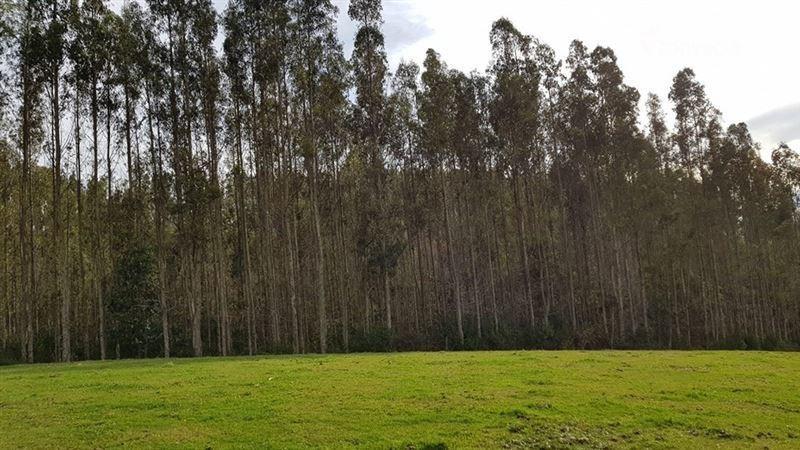 forestal en venta en paillaco
