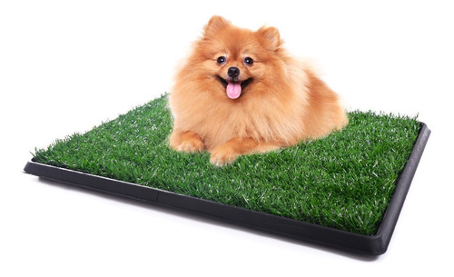 formación pee wc interior cachorro mascota perro insignifica