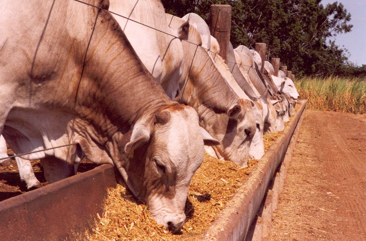 Resultado de imagem para ração para gado