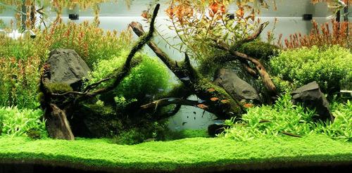 fosfato monopotasico fertilizante plantas acuario 1 litro