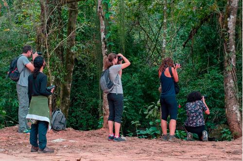 fotografia de aves - birdwatching - serra da mantiqueira