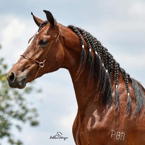 fotografia de equinos