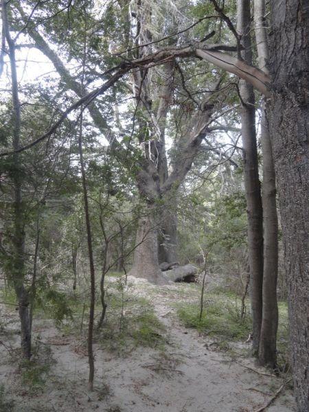 fraccion km 13,5, excelente campo en el corazón de bariloche
