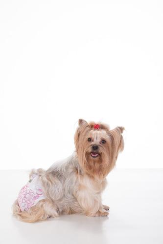fralda higiênica g fêmeas dog's care  24 unid