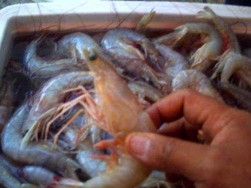 franklin!!!!productos frescos del mar