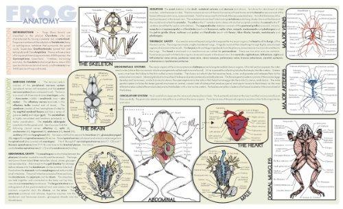 Frey Científico 588850 Laminado Rana Disección Mat, 9,75 X 1 ...