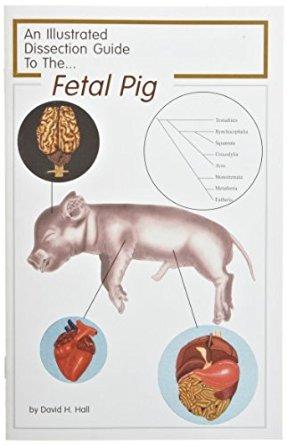Frey Científico 597039 Mini-guía De Cerdo Disección - $ 1,424.28 en ...