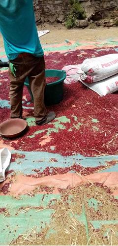 frijol rojo calidad ,de campo  cosecha nueva mayoristas 300q