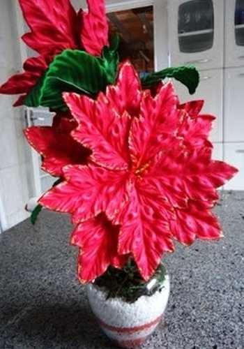 frisador de flor em eva, bico de papagaio , flor de natal