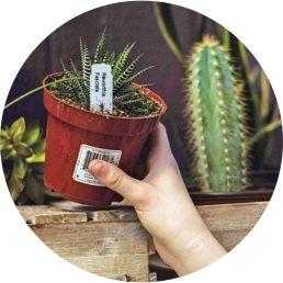 Imagen de una persona sosteniendo una maceta con un cactus.