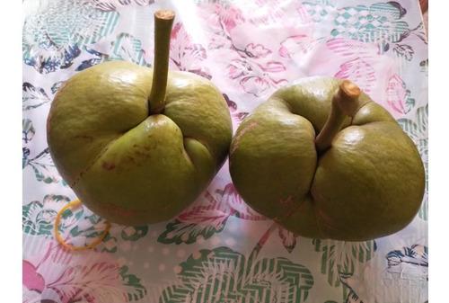 fruta maçã de elefante