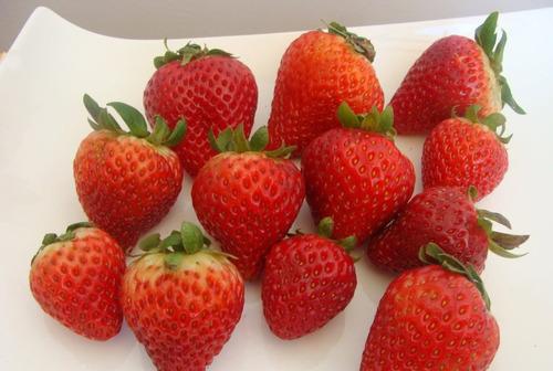 frutillas patagonicas congeladas iqf premium