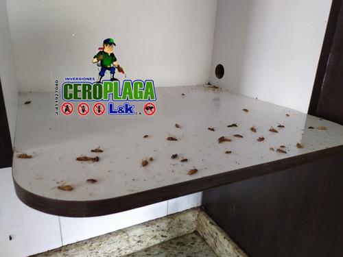 fumigacion chiripa cucarachas roedores zancudos termita