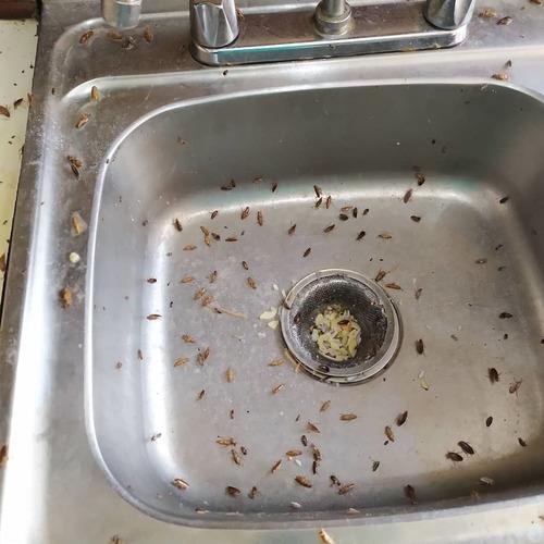 fumigacion chiripa cucarachas termita pulgas garrapata
